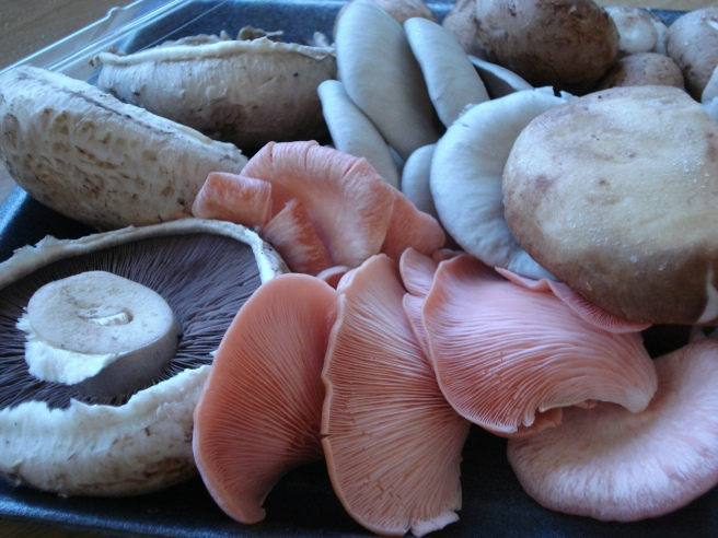 Peach coloured mushrooms