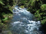 Waikato River, New Zealand