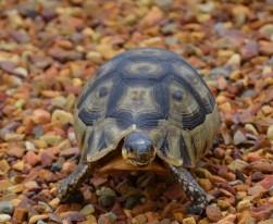 Tortoise in my garden