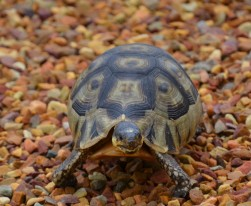 Tortoise in my garden